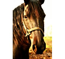 Portraits Of A Brown Horse Photographic Print