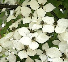 Dogwood Flowers by Karen Kaleta
