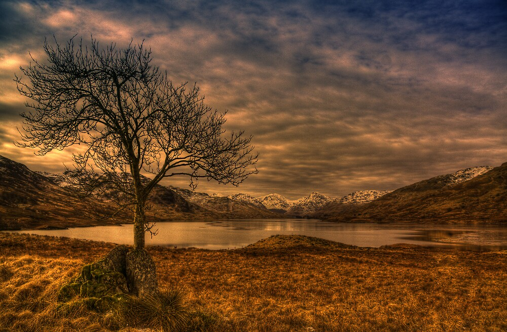 The Arklet Tree by Karl Williams