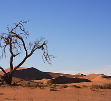 Tree in desert by ruitje