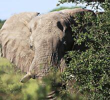 elephant by ruitje
