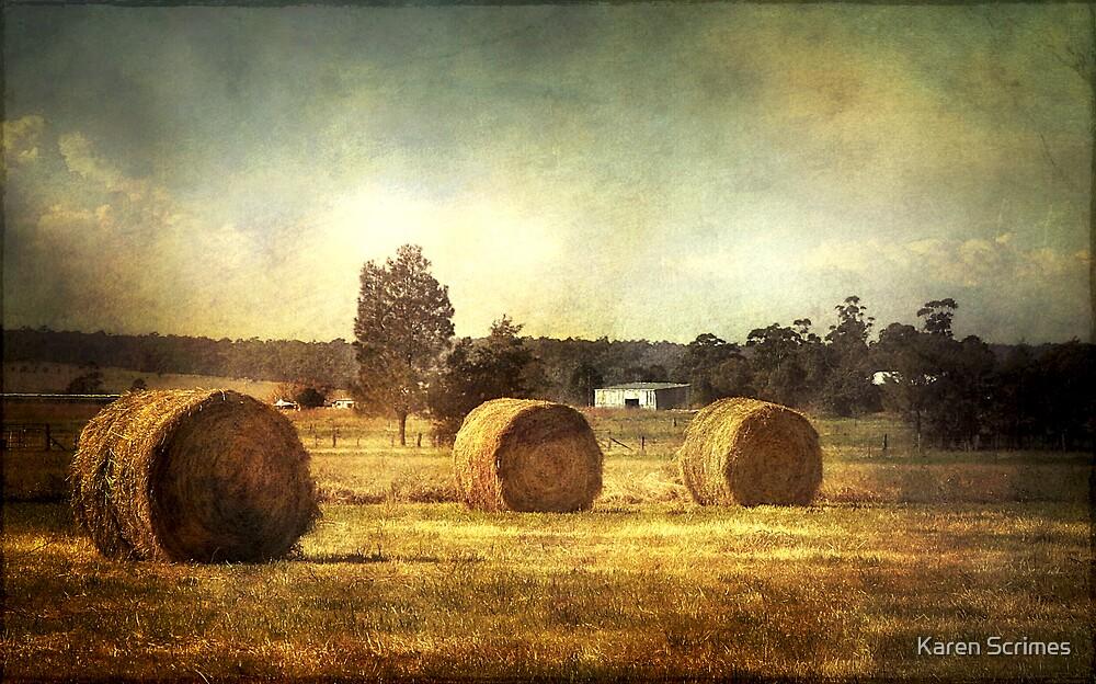Golden field by Karen Scrimes