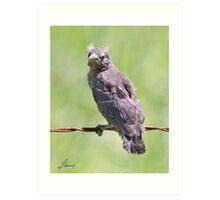 Cramer The Juvenile Crow Art Print