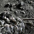 1.5.2015: Dead Bird II by Petri Volanen