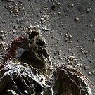 1.5.2015: Dead Bird III by Petri Volanen