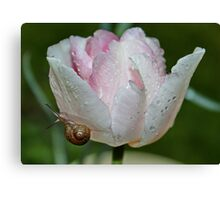 Angelique Tulip with Little Visitor Canvas Print