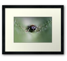 Focus Point Framed Print