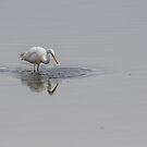 Egret #2 by Chris Cobern