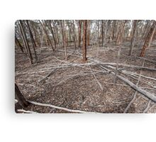 Mallet Forest - After the Tempest Canvas Print