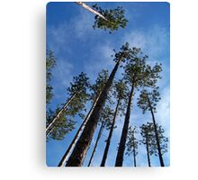 Towering Pines Canvas Print