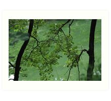 ZEN GREEN Art Print