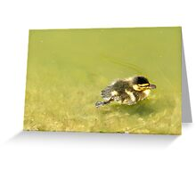Duckie. Greeting Card