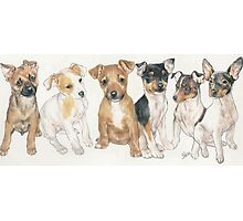 Rat Terrier Puppies Photographic Print