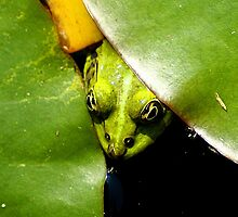 frog eyes through green leafs by Klaus Vartzbed