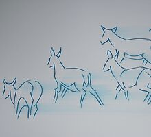 Deer Drawing by MikeJory