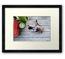 Stray. Framed Print