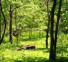 Lush Woodland by Dandelion Dilluvio