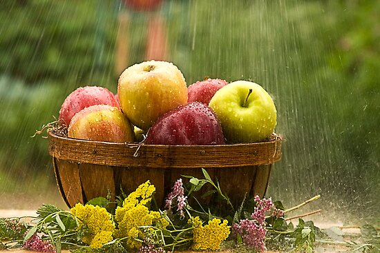 Apples in the Rain by Trudy Wilkerson