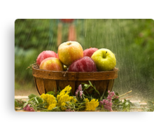 Apples in the Rain Canvas Print