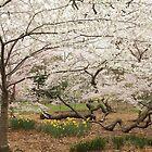 Central Park NYC by joeannNYC