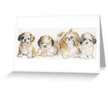 Shih Tzu Puppies Greeting Card