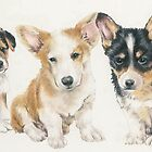 Welsh Corgi Puppies by BarbBarcikKeith