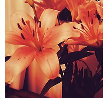 Still Life Lily in a Vase Photographic Print