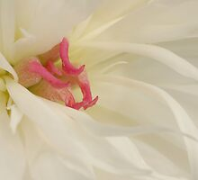 White Peony by AnnieSnel