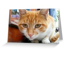 Kitten Confidential Greeting Card