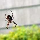 spider (Montauk, NY) by wordTease