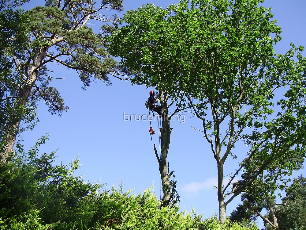 Tree Surgeon by brucemlong