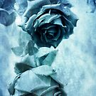 Blue Rose by Lydia Marano