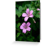 Pink geraniums Greeting Card