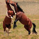 The Stallion Way by Gene Praag