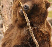 Grizzly Bear Cute by William C. Gladish