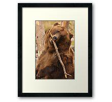 Grizzly Bear Cute Framed Print
