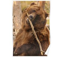 Grizzly Bear Cute Poster