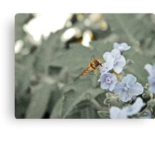 insect life and lavender Canvas Print