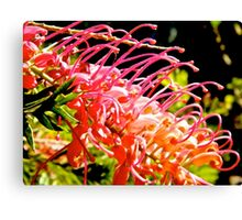 native red bottlebrush  Canvas Print