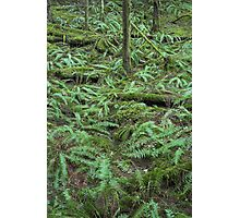 lush green forest , Golden Ears Provincial Park , British Columbia Photographic Print