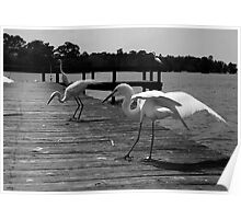Dance of the Egrets Poster