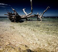 Dead Tree by zabcoloma