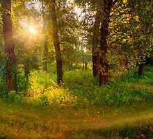 Sunrise in the Forest by MaxalTamor