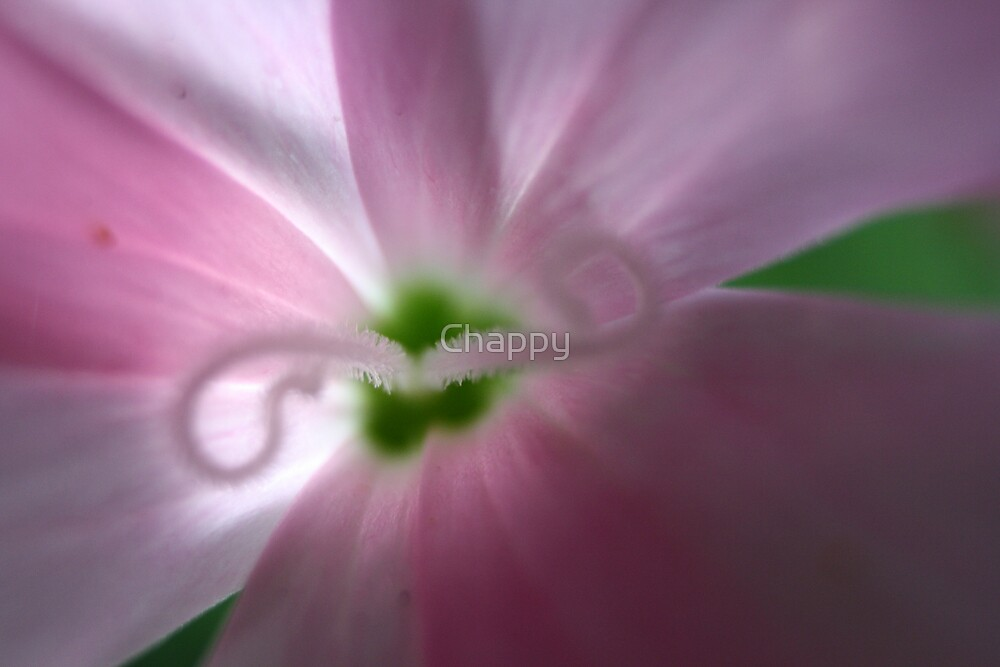 Heart of Pink by Chappy