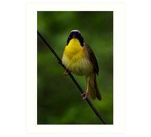 Common Yellow Throat Warbler 7 Art Print