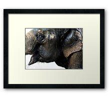 Exuberant Elephant Framed Print