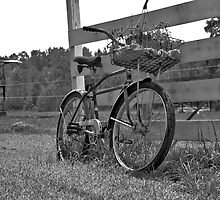 Biking in the Country by Wendy Mogul
