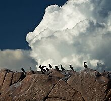 Cormorants awaiting the storm by MarkEmmerson