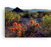 Palomino Valley Indian Paintbrush Canvas Print