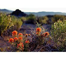 Palomino Valley Indian Paintbrush Photographic Print
